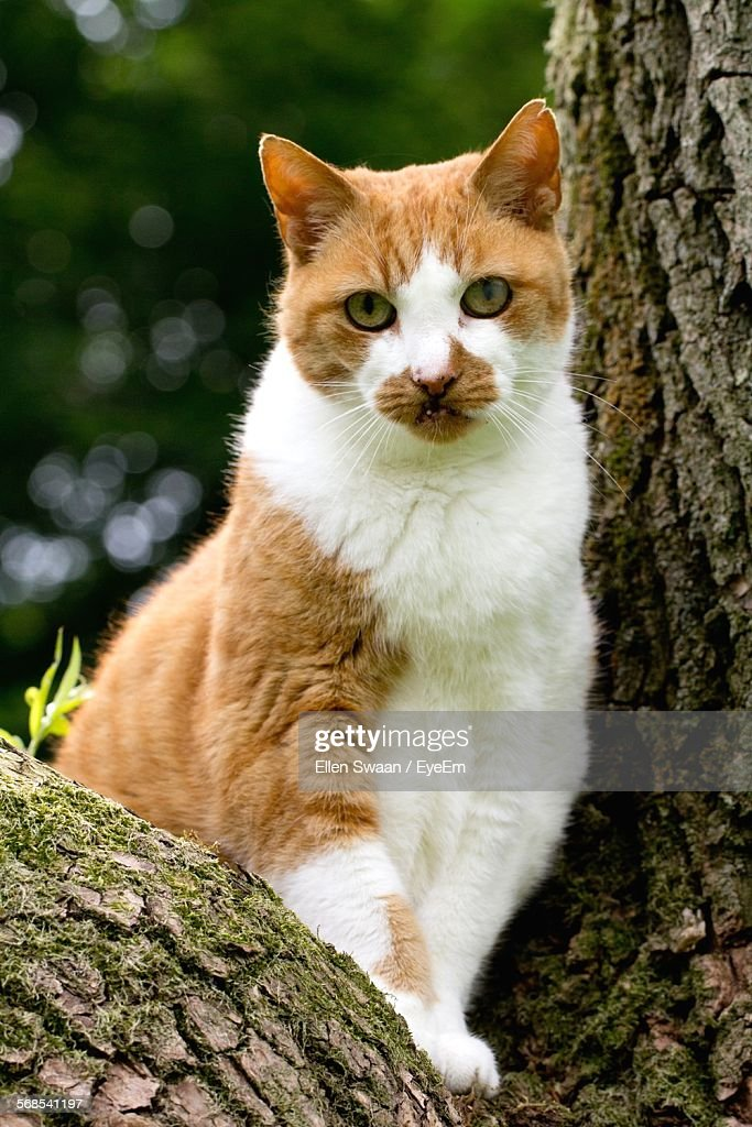 Portrait Of Cat Sitting On Tree : Stock Photo