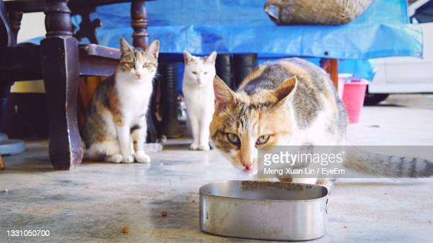 portrait of cat sitting outdoors - taiwan stock pictures, royalty-free photos & images