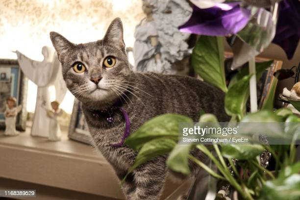 portrait of cat sitting - steven cottingham stock-fotos und bilder