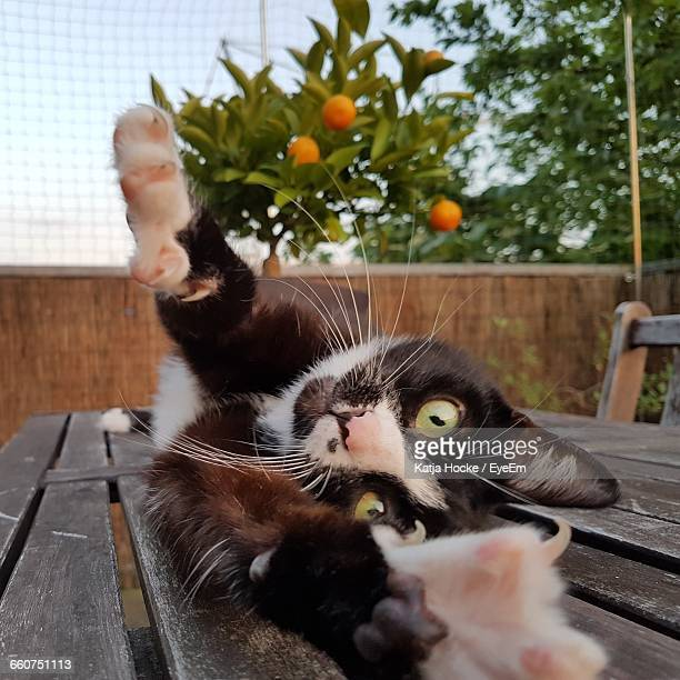 Portrait Of Cat Stretching In Balcony