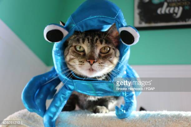 portrait of cat wearing octopus costume - cat costume stock photos and pictures