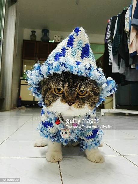 Portrait Of Cat Wearing Sweater And Knit Hat At Home