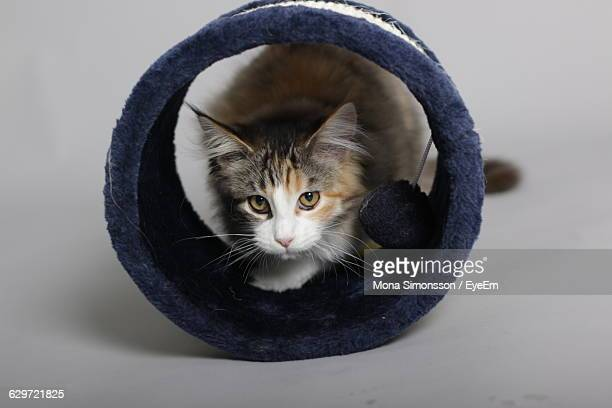 Portrait Of Cat With Toy Against Gray Background