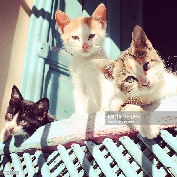 portrait of cats at window - three animals stock pictures, royalty-free photos & images