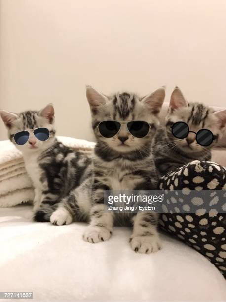 Portrait Of Cats In Sunglasses
