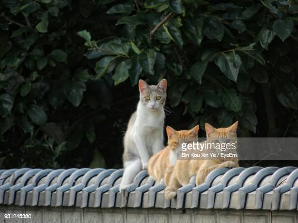portrait of cats sitting against tree - three animals stock pictures, royalty-free photos & images