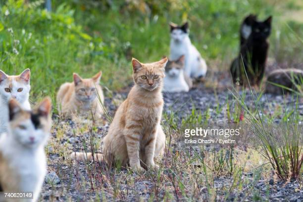 portrait of cats sitting on grass - large group of animals stock pictures, royalty-free photos & images