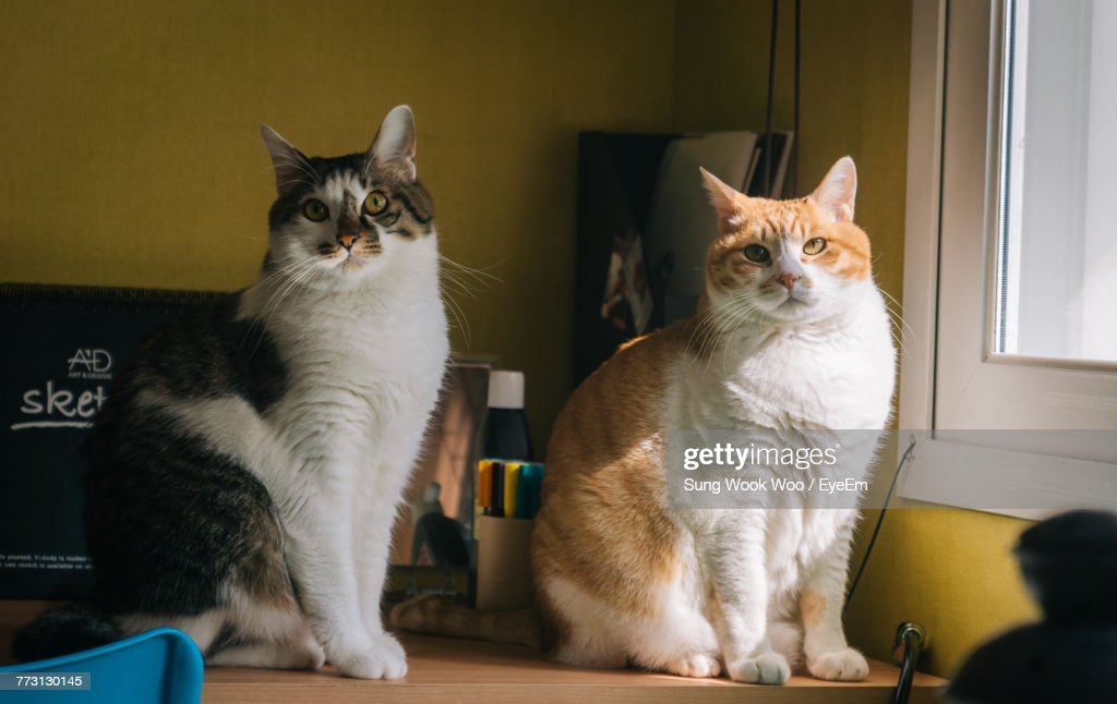 Portrait Of Cats Sitting On Table At Home : Photo