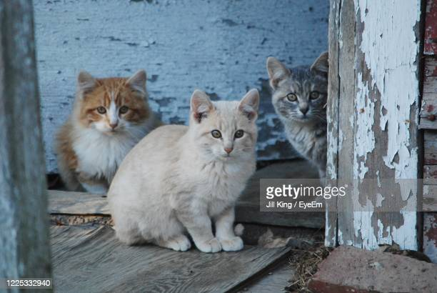 portrait of cats sitting on wood - kitten stock pictures, royalty-free photos & images