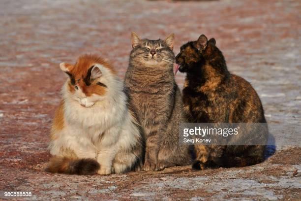 portrait of cats sitting together - 三匹 ストックフォトと画像