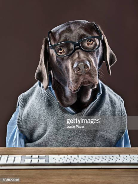 Portrait of Chocolate Labrador wearing eyeglasses sitting in front of computer keyboard