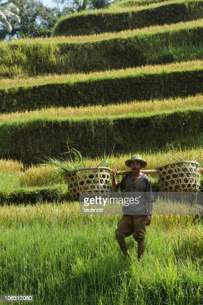 portrait of  countryman - tegallalang stock photos and pictures