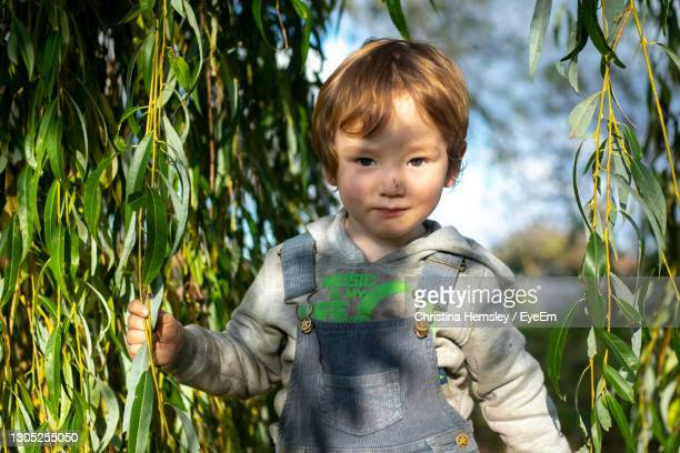 portrait of cute boy standing outdoors under a willow tree - one baby boy only stock pictures, royalty-free photos & images