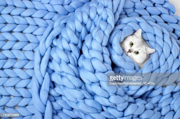 portrait of cute cat - wool stock pictures, royalty-free photos & images