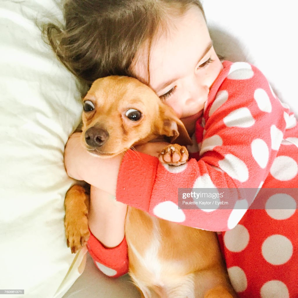 Portrait Of Cute Dog Lying On Bed At Home : Stock-Foto
