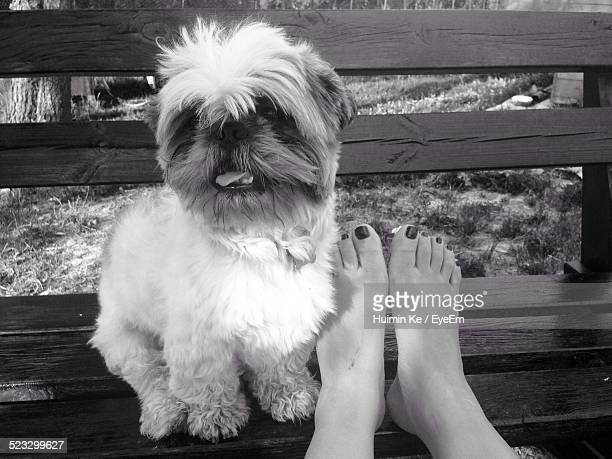Portrait Of Cute Dog On Bench By Legs