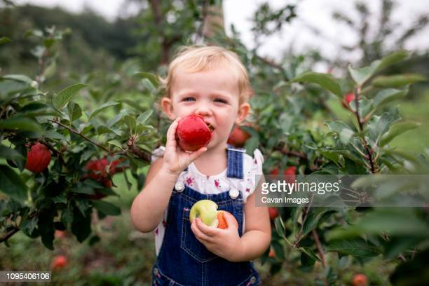 portrait of cute girl eating apple while standing against fruit trees - bites photos et images de collection
