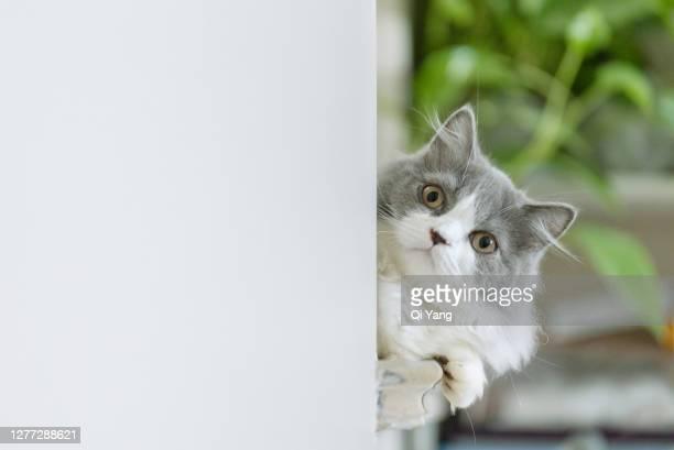 portrait of cute kitten - um animal imagens e fotografias de stock