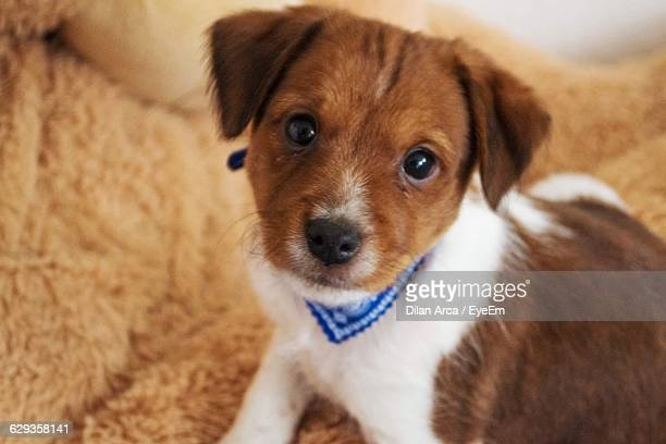 portrait of cute mixed breed puppy - mixed breed dog stock pictures, royalty-free photos & images