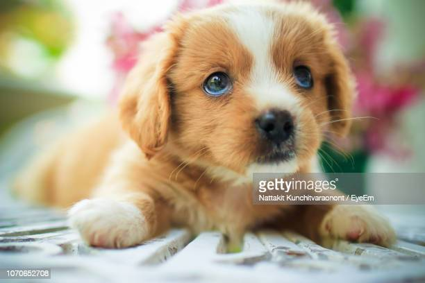 portrait of cute puppy - animal whisker stock pictures, royalty-free photos & images