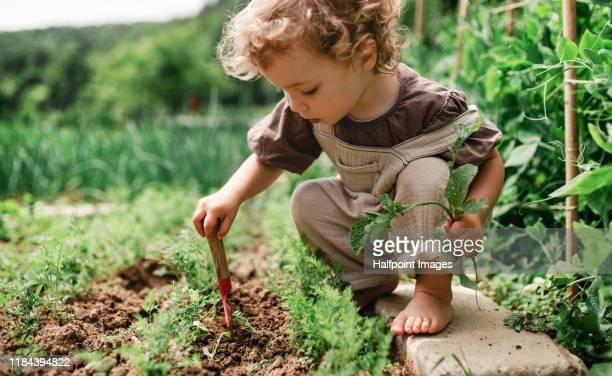 a portrait of cute small child outdoors gardening. - vie simple photos et images de collection
