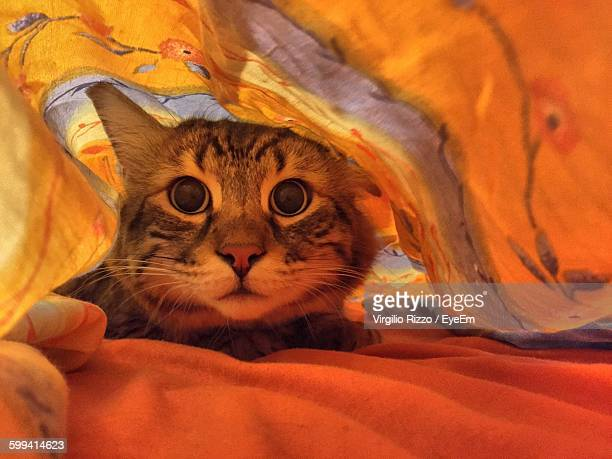 portrait of cute tabby hiding under blanket at home - cat hiding under bed stock pictures, royalty-free photos & images