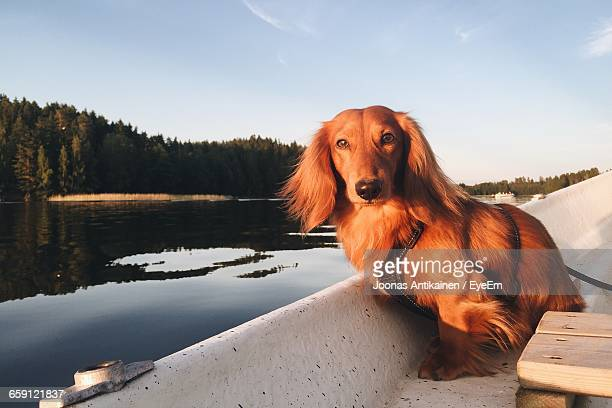 Portrait Of Dachshund Sailing On Boat In River Against Sky