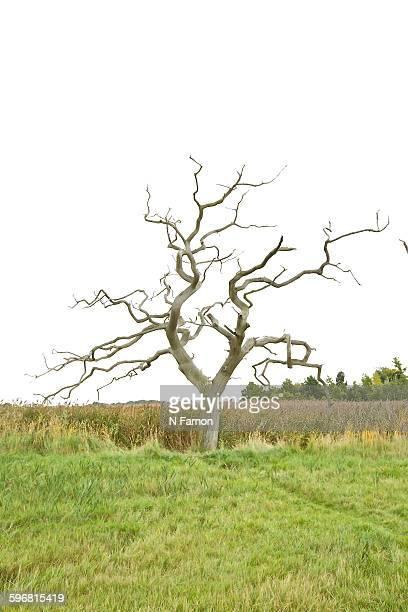Portrait of dead tree