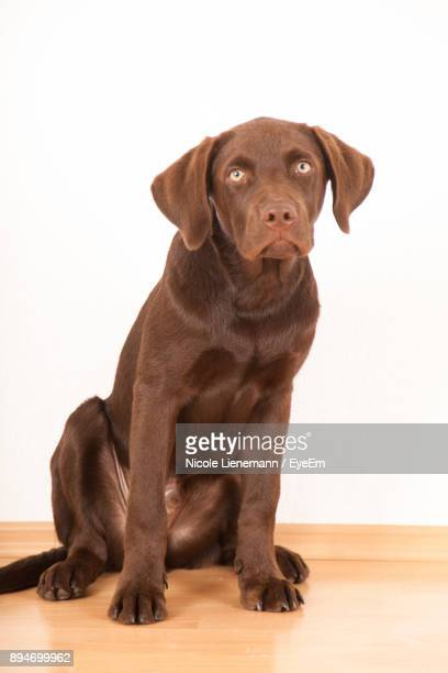 Portrait Of Dog Against White Wall