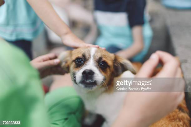 portrait of dog amidst people - bortes stock pictures, royalty-free photos & images