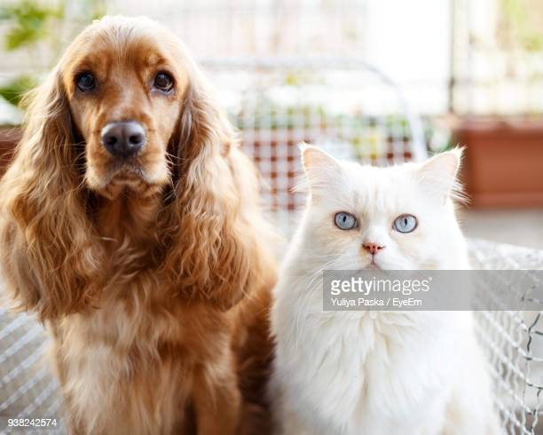 portrait of dog and cat - dog and cat stock photos and pictures