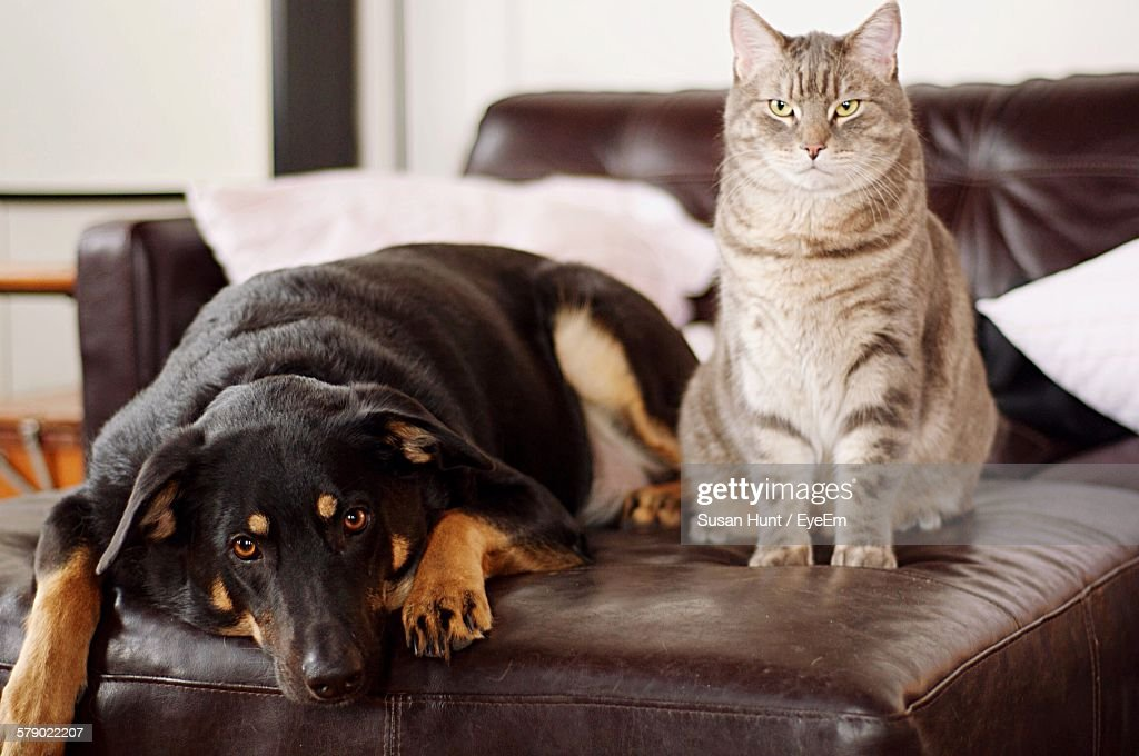 Portrait Of Dog And Cat Relaxing On Sofa : Stock Photo