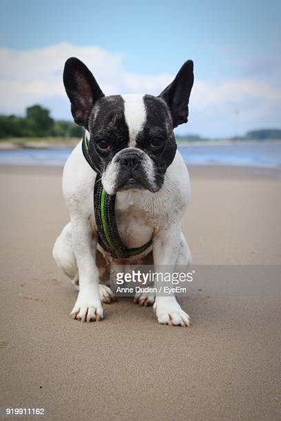 Portrait Of Dog At Beach Against Sky