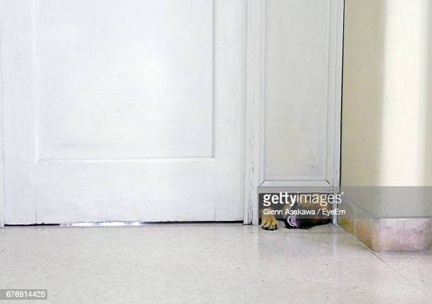 Portrait Of Dog Coming Out From Door