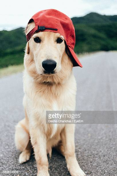 portrait of dog in red cap sitting on road - bones - fotografias e filmes do acervo