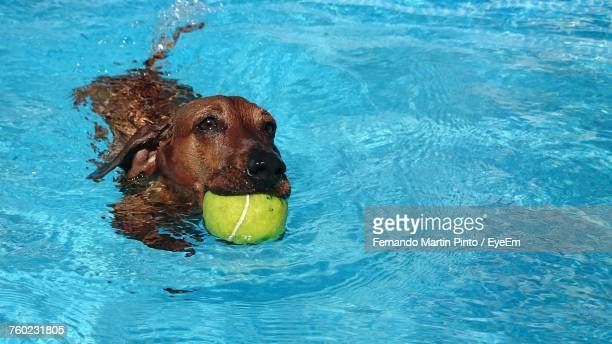 Portrait Of Dog In Swimming Pool