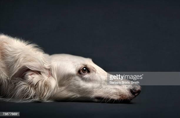 Portrait of dog laying on floor