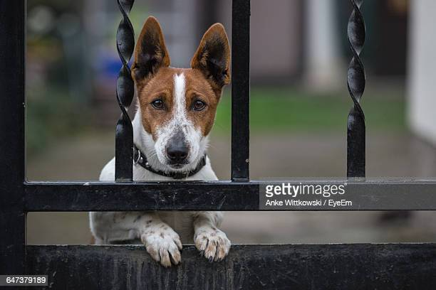 Portrait Of Dog Looking Through Metal Gate