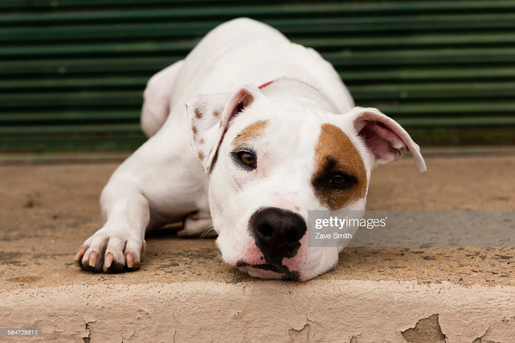 Portrait of dog, lying down, outdoors : Stock Photo