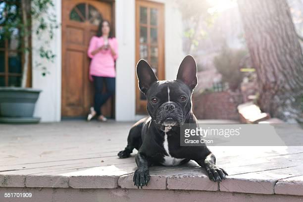 Portrait of dog lying on patio