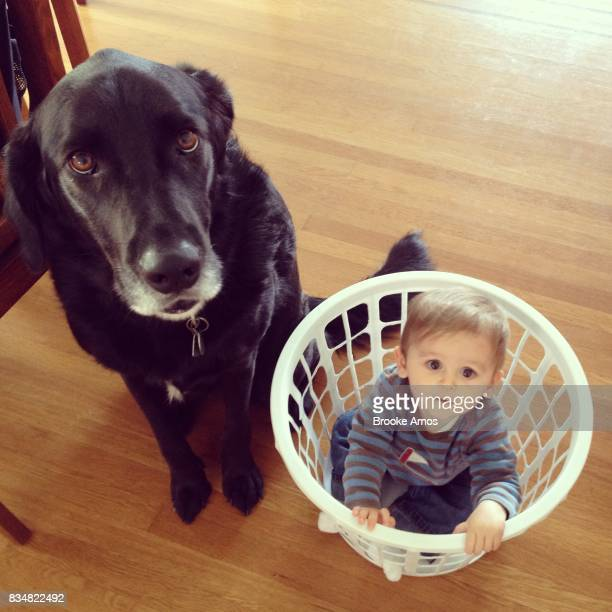 Portrait of dog next to infant boy playing in laundry basket