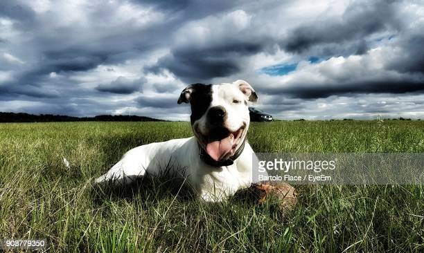Portrait Of Dog On Field Against Cloudy Sky