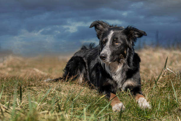 Portrait of dog on field against sky