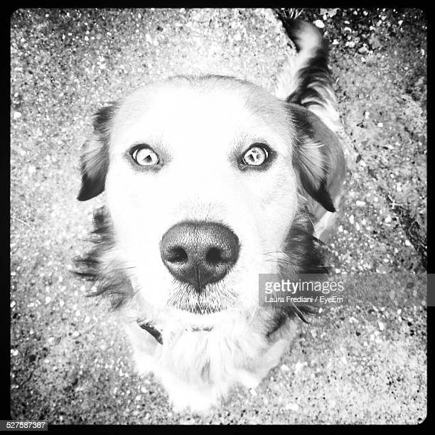 portrait of dog on field - massa stock pictures, royalty-free photos & images