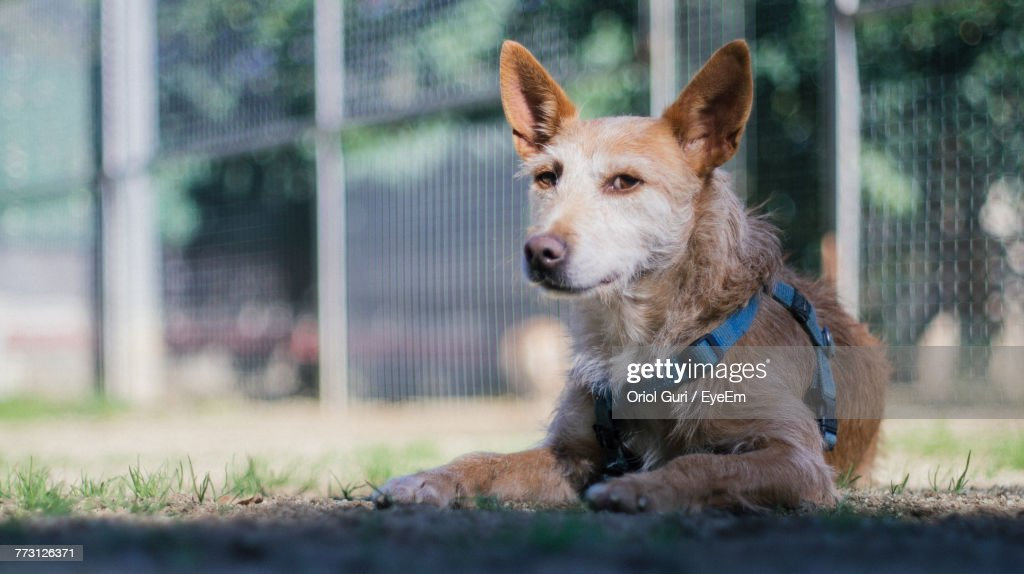 Portrait Of Dog On Field : Photo