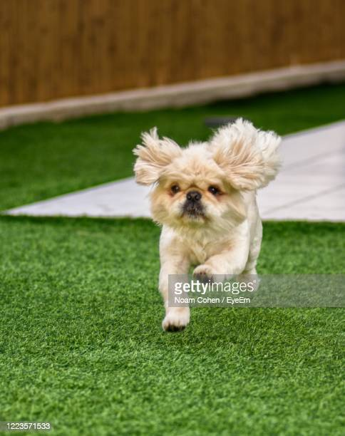 portrait of dog on grass - noam cohen stock pictures, royalty-free photos & images