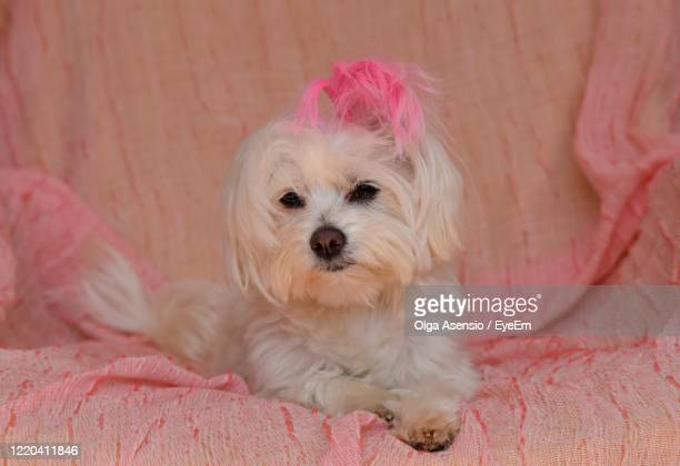 portrait of dog - millennial pink stock pictures, royalty-free photos & images