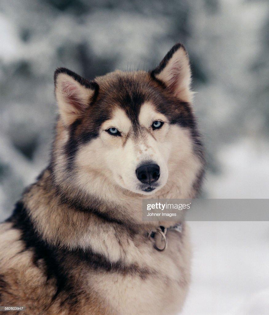 Portrait of dog : ストックフォト