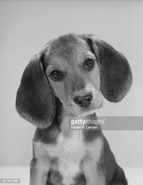 portrait of dog - mamífero con garras fotografías e imágenes de stock