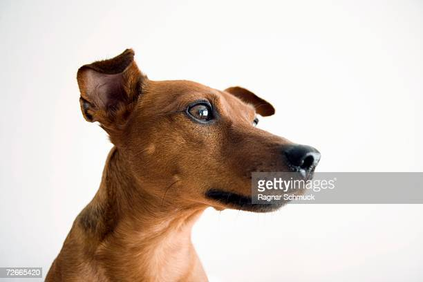 portrait of dog - snout stock pictures, royalty-free photos & images